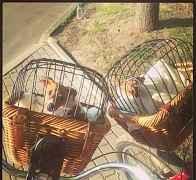 Плетёная велокорзина Tuckernuck для перевозки живо